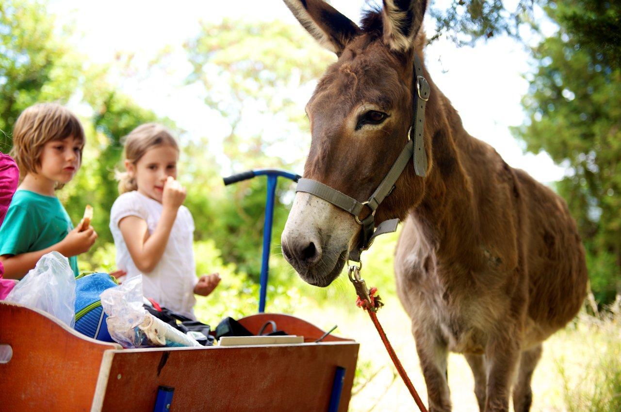 Honigtal auf Korfu - Kinderprogramm mit Esel
